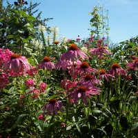 Bunte Blütenvielfalt
