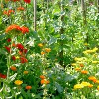 Gemüse und Blumen