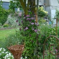 Garten Frau Hauk 11.6.14 024