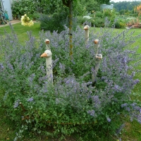 Garten Frau Hauk 11.6.14 029