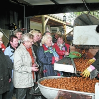 Leicht zu knacken: Nüsse aus Meckesheim