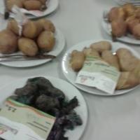 Kartoffel01