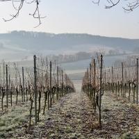 Winterruhe in den Weinbergen