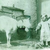 Ziege und Hase