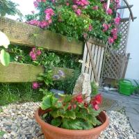 Rumbler-Rosen am Gartentor
