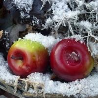 Winterstilleben