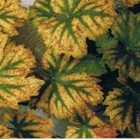 Der Herbst zeigt Farbe
