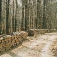 Brennholz, soweit das Auge reicht