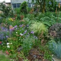 Garten Frau Hauk 11.6.14 023