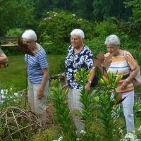 Garten Frau Hauk 11.6.14 028