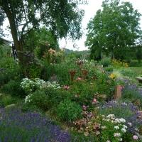 Garten Frau Hauk 11.6.14 040