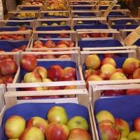 Apfel Landfrauen 24.2.16 010